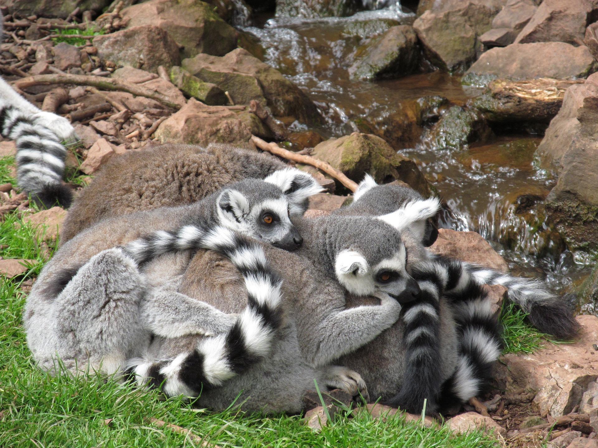 Voyage en Afrique, à la découverte des meilleurs sites de Madagascar