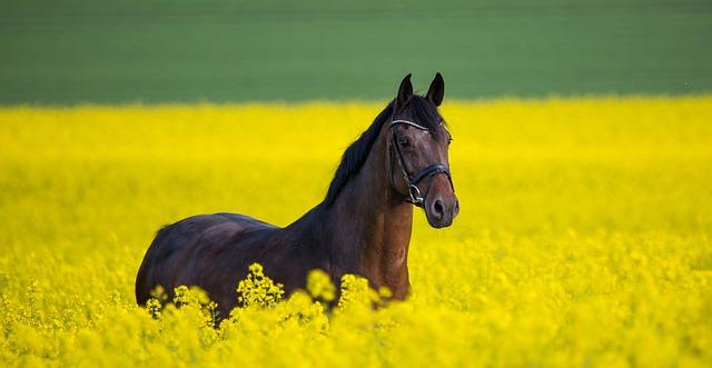 La balade à cheval: tout ce qu'il faut savoir